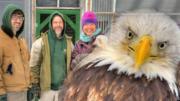 Bald Eagle Bruce