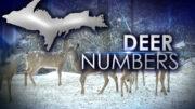 deer-numbers-feauture